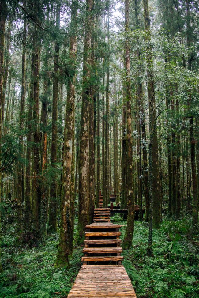 Khu bảo tồn rừng Ming Chi.
