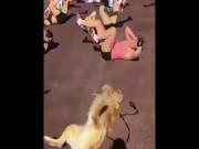 Chú chó tập thể dục nhiệt tình hơn cả hội chị em