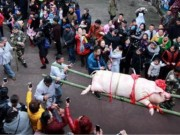 """Du khách đổ xô xem lễ tế lợn có  """" một không hai """"  ở Trung Quốc"""