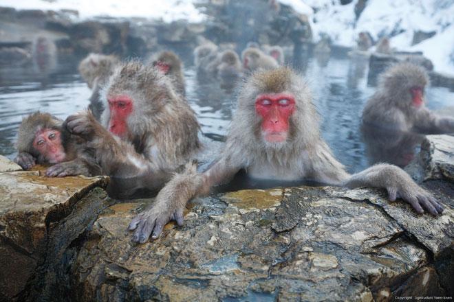 7 địa điểm đón mùa đông sẽ khiến bạn yêu Nhật Bản ngay lập tức - 7