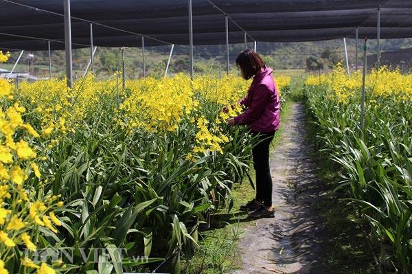 """Giảng viên về vườn """"nghịch đất"""" trồng lan Vũ nữ, lãi 50 triệu/tháng - 2"""