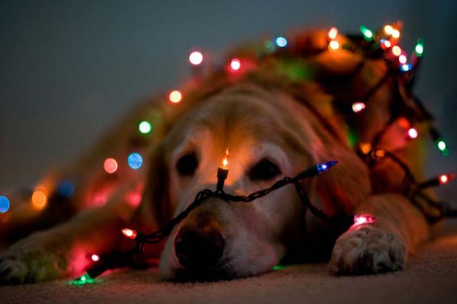 Những bí kíp chụp ảnh đẹp lung linh đêm Giáng Sinh - 9