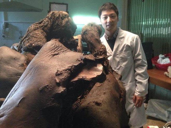 Những sinh vật đã tuyệt chủng trong Công viên kỷ Jura sắp được hồi sinh? - 3