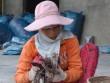 Giá mực xà cao mức khó tin 210.000 đồng/kg, ngư dân vui như hội