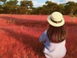 Sẽ phá rừng thông, đồi cỏ hồng tuyệt đẹp làm sân golf?