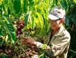 Tăng 30% thu nhập, nông dân tự hào về dự án 7 năm đồng hành cùng hạt cà phê Việt