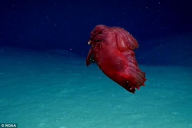 Khám phá bể sâu, phát hiện quái phẩy chẳng đầu đi bộ chừng ăn - 1