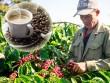 Chất lượng ly cà phê Việt - mối quan tâm của những người yêu cà phê
