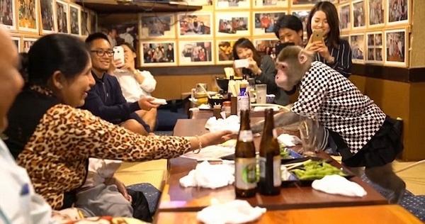 Thuê khỉ làm...bồi bàn, quán rượu ở Nhật Bản gây sốt - 1
