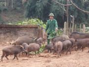 Thị trường - Tiêu dùng - Về ngoại ô, xem lợn rừng chạy bộ... cho tiêu mỡ