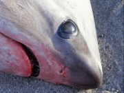 Thế giới - Rét kỷ lục ở Mỹ: Người chết cóng, chó đông cứng, cá mập sốc chết