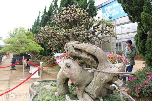 Ngắm lượng dúi 200 giai đoạn, ví 200 triệu của nghệ nhân Bonsai nhà nước - 3