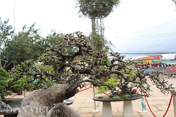 Ngắm lượng dúi 200 giai đoạn, ví 200 triệu của nghệ nhân Bonsai nhà nước - 4