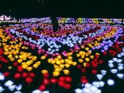 9.999 đóa hồng bằng đèn led  khoe sắc  tại sở thú ở Sài Gòn