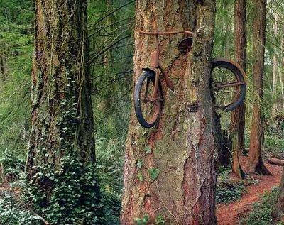 """Chùm ảnh: Những loài cây """"lạ"""" - 12"""