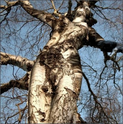"""Chùm ảnh: Những loài cây """"lạ"""" - 13"""