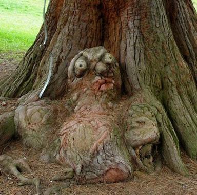 """Chùm ảnh: Những loài cây """"lạ"""" - 14"""