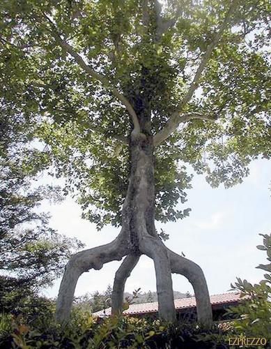 """Chùm ảnh: Những loài cây """"lạ"""" - 1"""