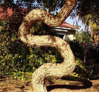 """Chùm ảnh: Những loài cây """"lạ"""" - 3"""