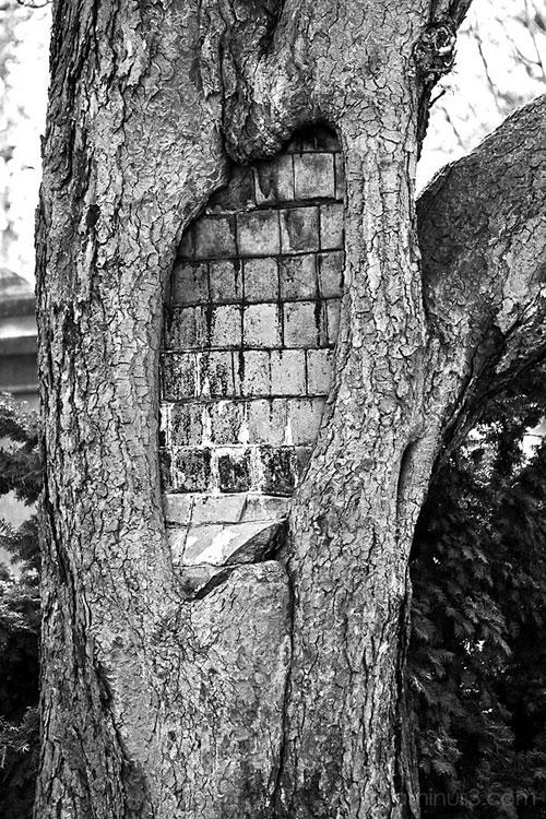 """Chùm ảnh: Những loài cây """"lạ"""" - 4"""