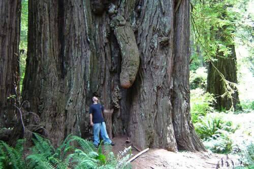 """Chùm ảnh: Những loài cây """"lạ"""" - 11"""