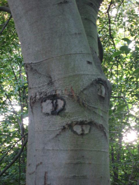 """Chùm ảnh: Những loài cây """"lạ"""" - 5"""