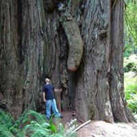 """Chùm ảnh: Những loài cây """"lạ"""""""