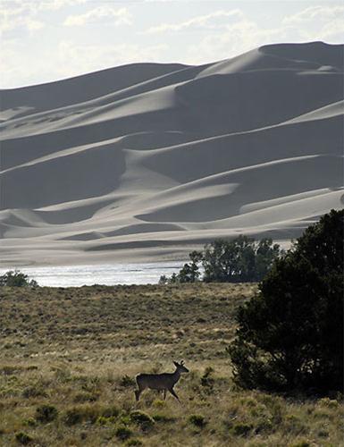 Cảnh đẹp những cồn cát ở Great Sand Dunes, Du lịch,