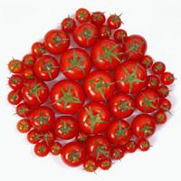 Ẩn số từ quả cà chua