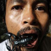 """""""Ăn, ở"""" với 4.600 con bọ cạp"""