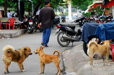 Từ hôm nay, nuôi chó phải đăng ký - 1