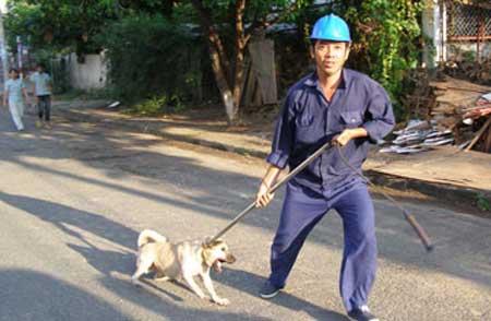 Từ hôm nay, nuôi chó phải đăng ký - 2