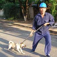 Từ hôm nay, nuôi chó phải đăng ký