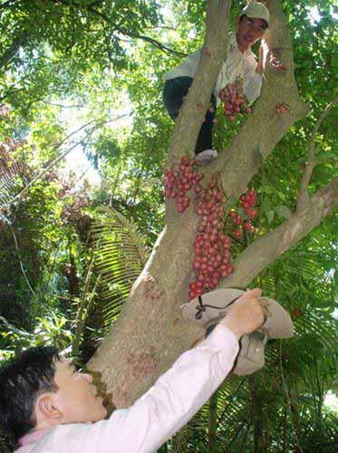 Mùa dâu rừng - 1
