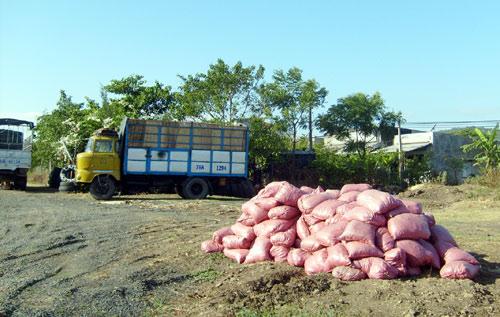 Chuyện bán...phân bò ở Phú Yên - 3