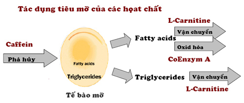 Mỡ thừa & Cellulite vùng bụng - 2