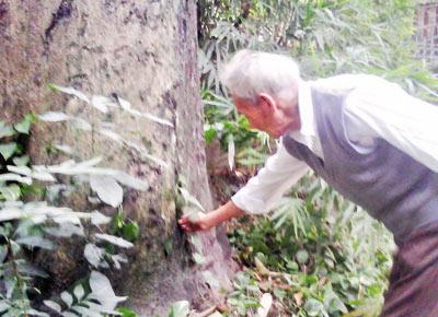 Lạc trong vườn cây tuổi nghìn năm giữa Hà thành - 1