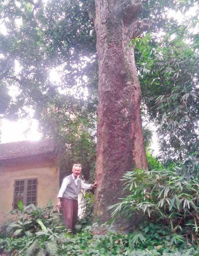 Lạc trong vườn cây tuổi nghìn năm giữa Hà thành - 2