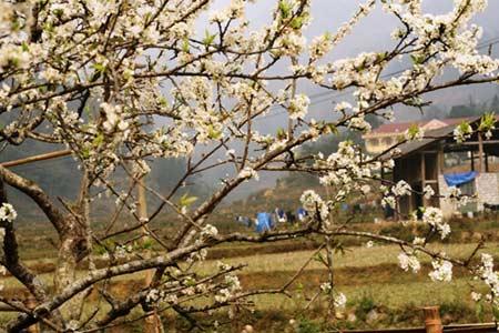 Bắc Hà - Khi mùa xuân ghé thăm, Du lịch, Bắc Hà, mùa xuân, chụp ảnh, du khách