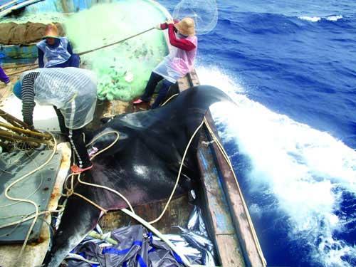 Săn cá khổng lồ - 1