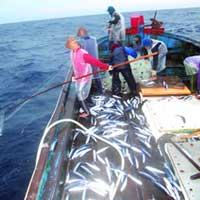 Săn cá khổng lồ