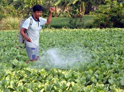 Thảm họa lớn từ thuốc trừ sâu - 1