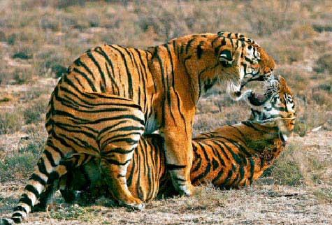 Chuyện loạn luân ở vườn thú Hà Nội - 1