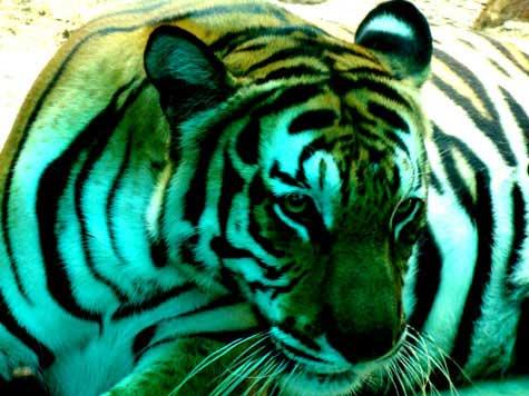 Chuyện loạn luân ở vườn thú Hà Nội - 2