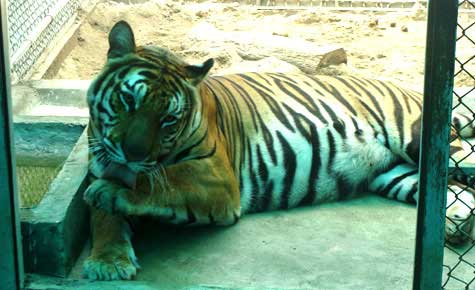 Chuyện loạn luân ở vườn thú Hà Nội - 3