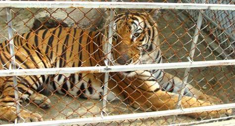 Chuyện loạn luân ở vườn thú Hà Nội - 4