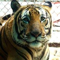 Chuyện loạn luân ở vườn thú Hà Nội