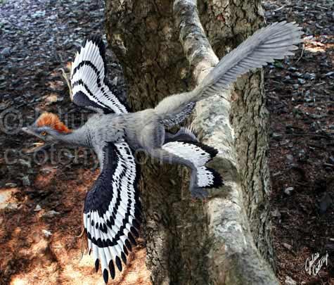 Hé lộ hình ảnh độc của... chim 4 cánh - 3