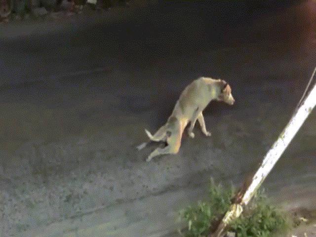 """Clip: Chú chó lê lết bằng hai chân và cái kết """"siêu thốn"""""""