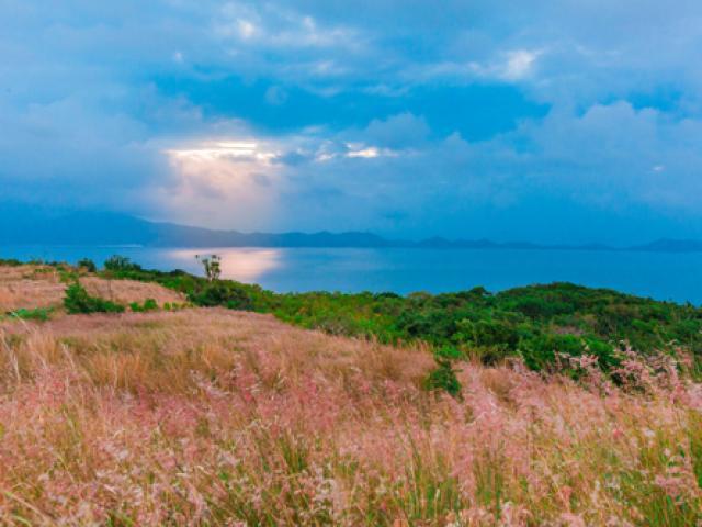 Du lịch - Check-in ngay đồi cỏ lau bạt ngàn ở Bình Ba